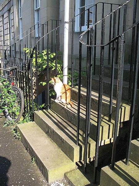 "File:""Evil kitty"" - geograph.org.uk - 929329.jpg"