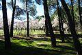 ®s K3 SD ┼ MADRID KATRESYA PQUE. QUINTA de los MOLINOS - panoramio (19).jpg