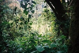 Parque Natural Obô de São Tomé - Image: Óbo (4238094175)