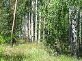 Биринський ліс5.jpg