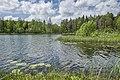 Быковщинское озеро2.jpg