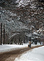 Део Ф.Горе зими.jpg