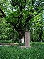 Дерево, Парк Глібова, Веселий Поділ 01.jpg
