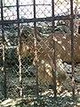 Зоологічний парк тварини в парку.jpg
