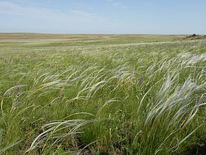 Eurasian Steppe - Russian steppe in the Orenburg Oblast