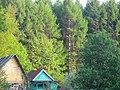 Лес оживает - panoramio.jpg