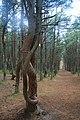 Национальный парк Куршская коса 1.jpg