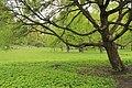 Парк Монрепо. Россия, Ленинградская область.jpg