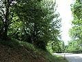 Парк шума Гази Баба во мај (10).JPG