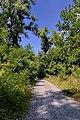 Польові та лісові доріжки 03.jpg