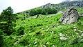 """Стара Планина-околностите на хижа""""Рай"""" - panoramio (8).jpg"""