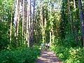 Тарховский лесопарк. - panoramio.jpg
