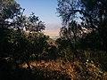 Ташкентская область - panoramio (17).jpg