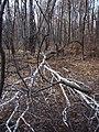Украина, Киев - Голосеевский лес 255.jpg