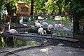 Фламинго. Одесский зоопарк.jpg