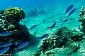 אתר צלילה - המערות.jpg