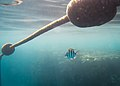 דגים ומצופים.jpg
