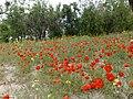 استند نگین زیرکوه - panoramio (1).jpg