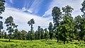 غابة الزان.jpg