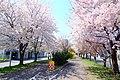 北海道道1148号札幌恵庭自転車道線(Shiroishi cycling road) - panoramio (2).jpg
