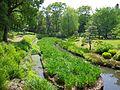 清澄庭園の花菖蒲田 2013.5.18 - panoramio.jpg