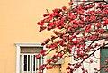 窗前的木棉Scenery in Guangzhou, China - panoramio.jpg