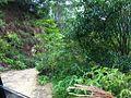 紫金南岭镇20121001 - panoramio.jpg