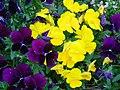 花圃 Flower Bed - panoramio.jpg