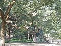 西湖风光 - panoramio (6).jpg