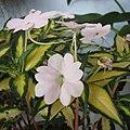 鳳仙花屬 Impatiens Spreading White SunPatiens -香港青松觀蘭花展 Tuen Mun, Hong Kong- (13918019829).jpg