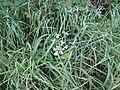 -2018-10-09 Flowers, Trimingham, Norfolk (2).JPG
