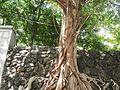 0011jfArroceros Forest Park Manila Ermita Fences Villegas Streetfvf 02.jpg