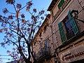 07170 Valldemossa, Illes Balears, Spain - panoramio (33).jpg