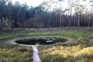 Pingo - Former Pingo, De Eese estate, Steenwijk, Netherlands. Pingo ponds can be hard to distinguish from kettle lakes.