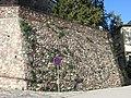 120 Muralla de la Força, a la base de l'església de Sant Pere de Vilamajor.jpg