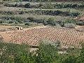 134 Vinyes del Trull (Vespella de Gaià), a la vall del barranc de Salomó.jpg