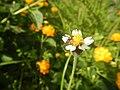 1518Garden City Flowers Guiguinto, Bulacan 49.jpg