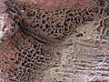 163 Erosió alveolar a les roques vora la Mare de Déu de la Roca (Mont-roig del Camp).JPG