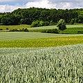 170618-03 Feldfrüchte.jpg