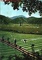 1968-07 1968年 韶山人民公社 农业学大寨.jpg