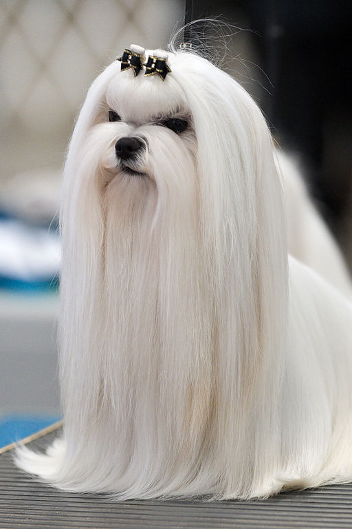 Dog with long hair