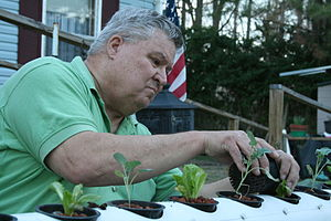 English: Rix Dobbs plants vegetables in his ho...