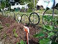 2009 EarthWorks community garden Detroit 4025746415.jpg