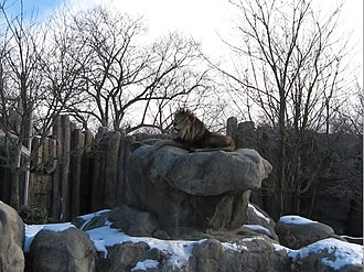 Franklin Park Zoo - Image: 2009 Franklin Park Zoo lion Boston