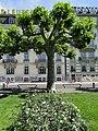 2011 Genève - panoramio (20).jpg