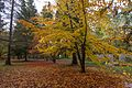 2014-04-25 Breenhold Gardens, Mount Wilson, New South Wales 03.jpg
