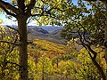 2014-10-04 13 52 23 View of Aspens during autumn leaf coloration from Charleston-Jarbidge Road (Elko County Route 748) in Copper Basin about 10.3 miles north of Charleston, Nevada.jpg