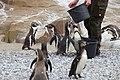 2015-05-24 Vogelpark Marlow 17.jpg