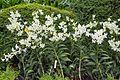 2016 Singapur, Ogrody botaniczne (337).jpg