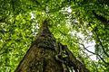 20170521-Naturschutzgebiet-Greifenberg 1.jpg